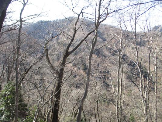 高取北尾根から華厳山を見る 樹々の梢がだんだんと赤味を増している すでに冬芽が芽をふく準備万端といった様子 輝いていて美しい