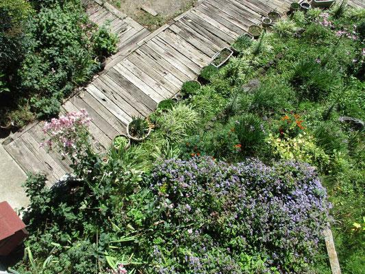 二階から見下ろした庭