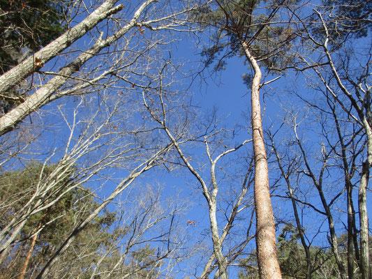 帰りは樹林で小鳥たちのお食事タイムに遭遇 エナガ、コガラ、コゲラなどたくさんの小鳥を見る