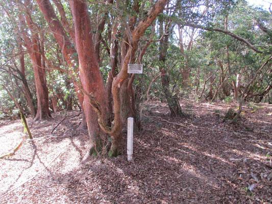 山頂標識のかかったヒメシャラの木