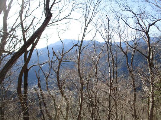 華厳山から荻野高取山に向かう稜線上からも冬の間は木立越しにずっと大山が見えています