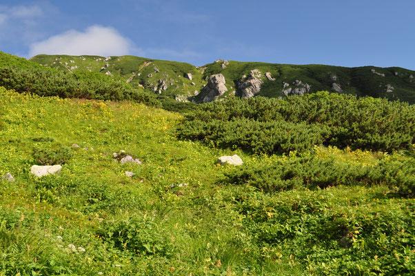 お花畑やハイマツ帯から衝立のように巨岩そのものが壁となって山稜を形造っている