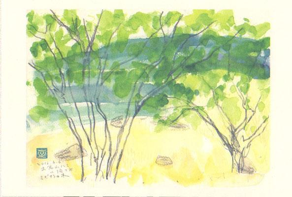 虫倉山のミズナラ林