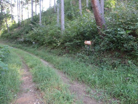 始めのうちは林道歩きが続き、山を巻いていきます