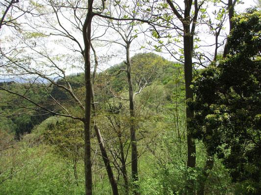 樹間越しにこれから向かう仏果山