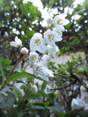 うつむいている花に、カメラを下から当てて写した