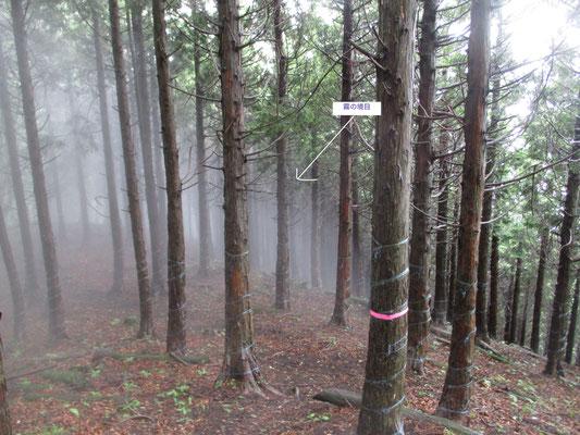 振り返ると植林の中に霧と晴れの区切りが見える