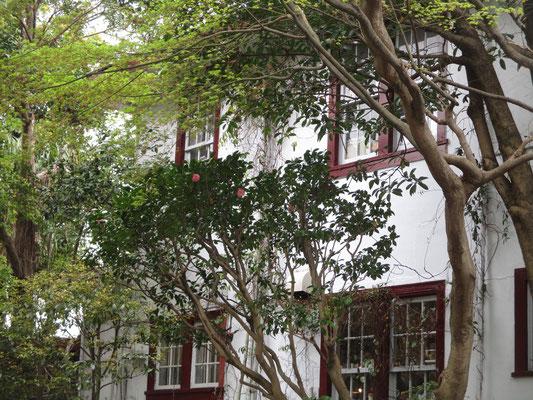 えの木邸(喫茶店)の窓