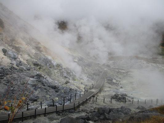 """見学用?に遊歩道がめぐらされています  この遊歩道周辺にも地熱の高い場所があり""""常連さん?""""が寝転んでいました ここから焼山への登山もできます"""