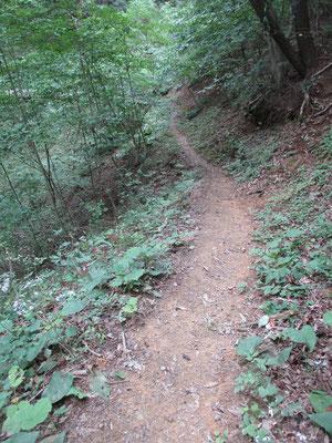 気分のいい静かな山道