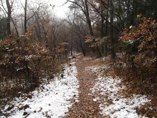 雪解けの道