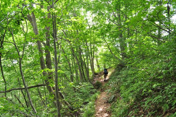 長い下山の末、ようやく樹林帯に戻る