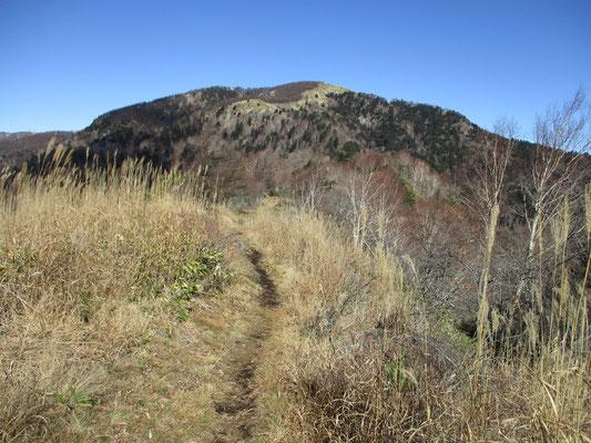 茶臼山に向かって気持ちいい登山道を進みます