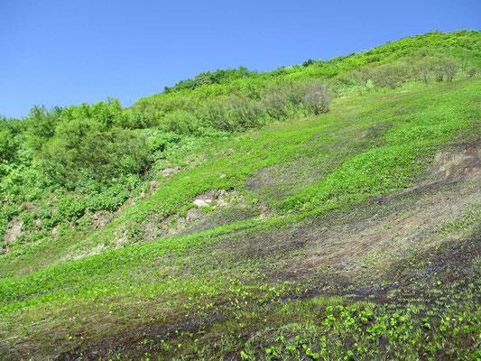 残雪が解けたばかりの斜面上の緑はまだ初夏の色合い
