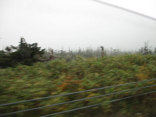 元気のないアスピーテラインの回りの木々