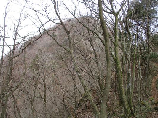 かなり行ったと思ったら、向こうに山頂がそびえているのを発見 (-_-;)