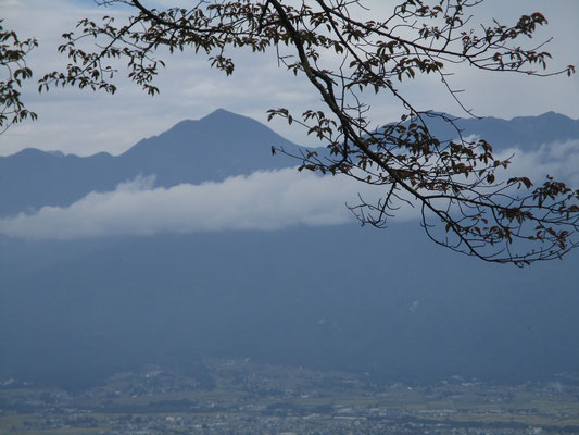 桜の梢越しに常念岳
