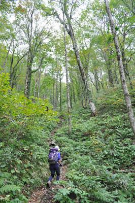 その森のなかをゆく