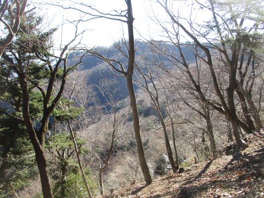 繊細な輝きに魅了される冬の木立と枝先 バックの山が淡いブルーグレーであることも、その美しさを際立たせています