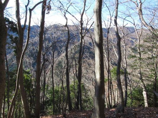 木立越しの景観が美しい