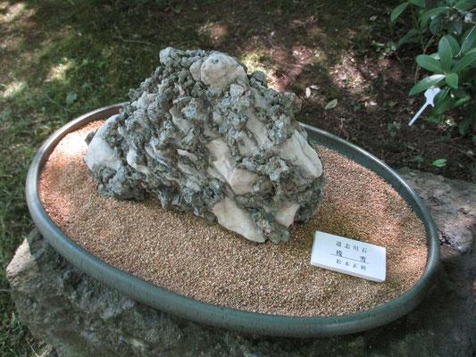 昨年寄せられた展示の奇石「残雪」 今年はどんな珍しい石や木が登場するか楽しみです