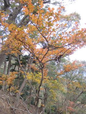 紅葉している木もちらほら 目を楽しませてくれる