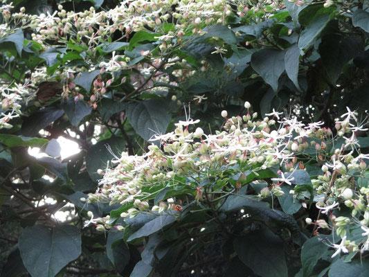 不思議な花の様子