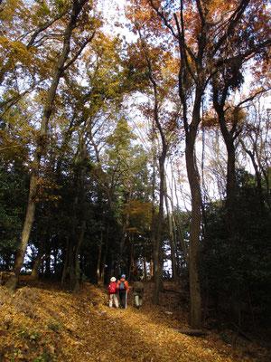 岩倉分岐に向かう箇所には美しい黄葉
