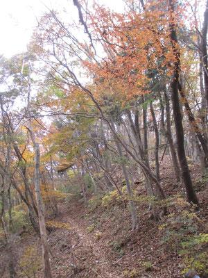 観光地の紅葉とは違う、落ち着いた雑木の秋色