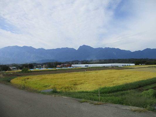 すっかり色づいた田んぼを前景に南アルプスの山並み