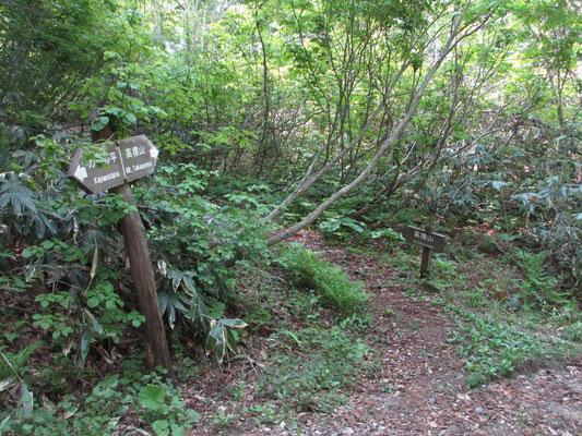カヤの平のゲートから暫く林道を歩くと登山口の標識に出会います