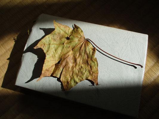 拾った落ち葉 イタヤカエデだろうか? 秋には「紅葉ハンドブック」などの図鑑が必携