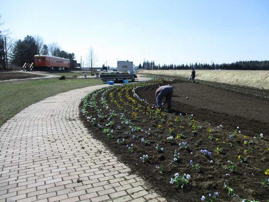 広尾線「愛の国から幸福へ」の謳い文句の「幸福駅」では整備された園内に、観光シーズンに向け花の苗を何百と植栽作業をしている最中でした