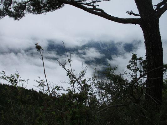 昼食は稜線上の開けた場所「一本松」にて 少し明るくなったタイミングだったが、ガスが湧いては流れ、残念ながら正面の丹沢山塊を見ることはなかった