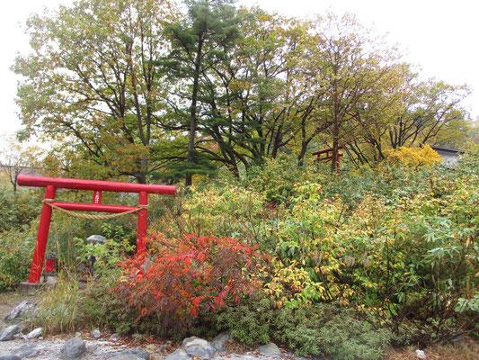 今度訪れた秋田方面の温泉には、必ずと言っていいほど、どこの温泉にもこうして「温泉の神様」を祀っていました 普通はもっと地味めですが玉川温泉のは鳥居も赤く塗られ立派でした