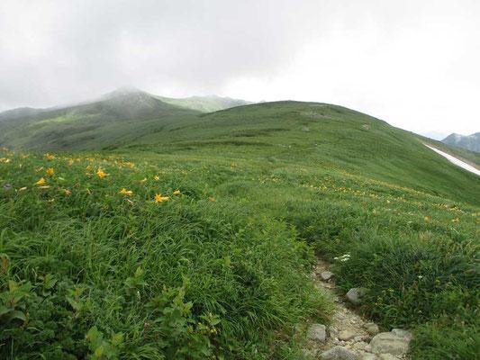 御西岳につづく方は湿性の草原が広がる