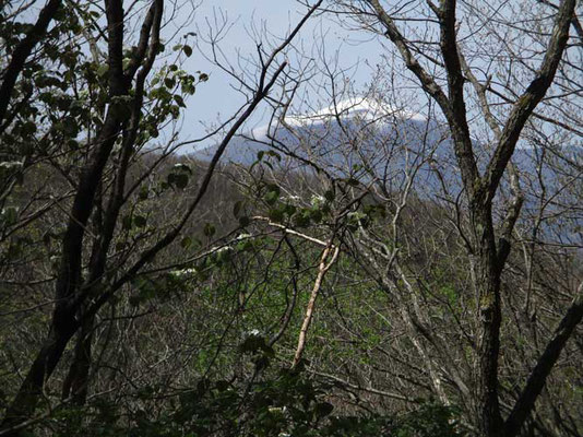 登っていると向こうに浅間山がだんだん見えてきました