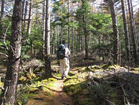 奥秩父らしい雰囲気の森を緩く登っていくガイド役リーダー