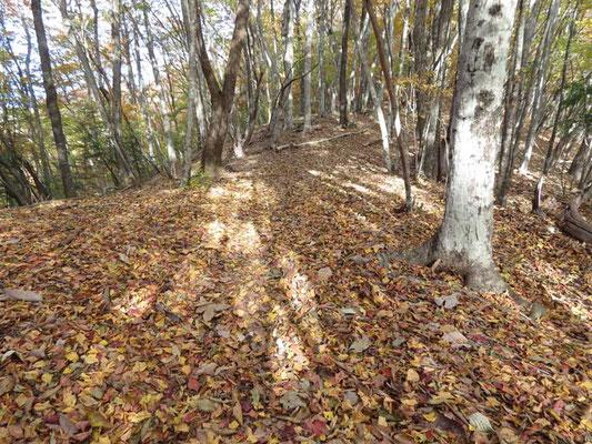 落ち葉の絨毯! こんな所を歩ける仕合せをしみじみ感じながらの散策です