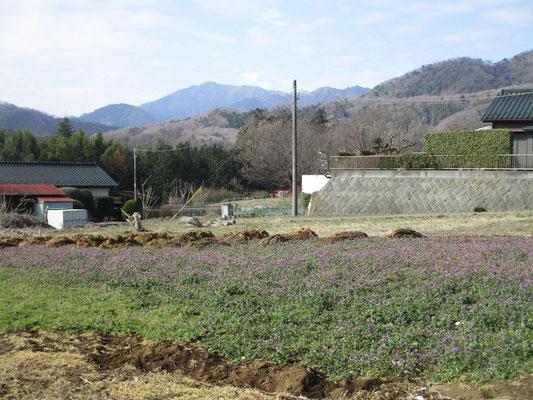 バス停から深堀という字の地区を行く 西山周辺の登山口に向かうまでの山麓一帯には、懐かしい風情の景色や生活の営みが残っているが、この日には一面のホトケノザの花畑が足を止めさせた
