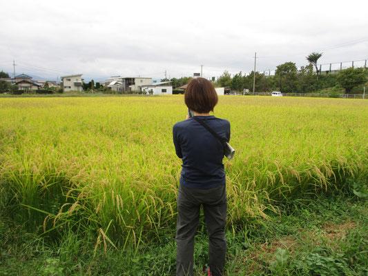 その田圃を撮影している友人