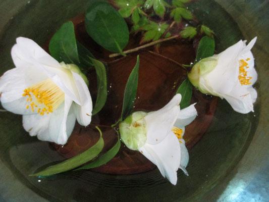 美しい椿を水盤に盛って・・・