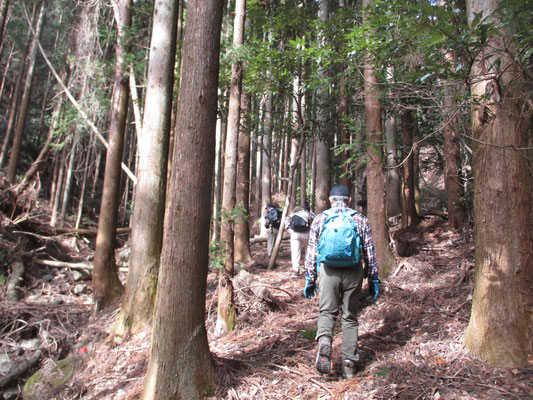 ミツマタ桃源郷に向かい、山麓を巻く道を行く