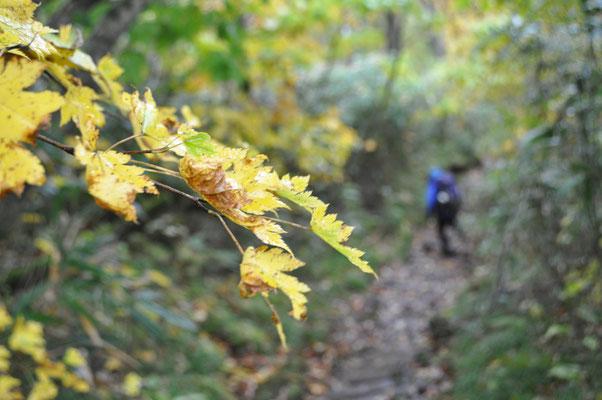 秋色の下山6
