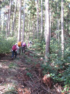 大沢登山口から経ヶ岳の尾根に取り付く いきなりの急登 つま先上がりの登りがしばらく続く