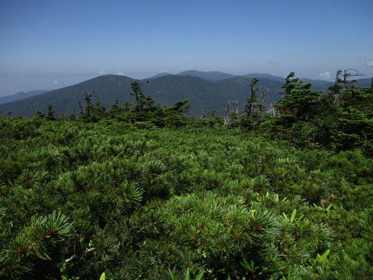 それまでは樹林に囲まれたゴロゴロの登山道が、山頂付近になると一体ハイマツとなります