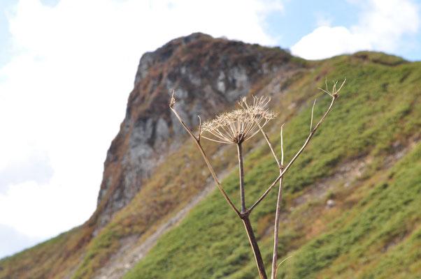 登ってきた方と反対側の秋田駒への縦走路へ下りてみました さて、ここからの様子はまさしく「烏帽子岳」!