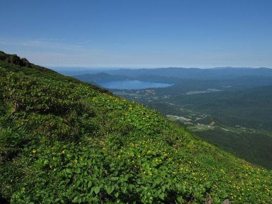 回り込んで登っていくと、ミヤマダイコンソウの群落の向こうに田沢湖が見えてくる
