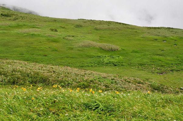 飯豊山を越えてゆくと湿性草原となり、下の方(写真では右上の草原)に池塘が点々としていました
