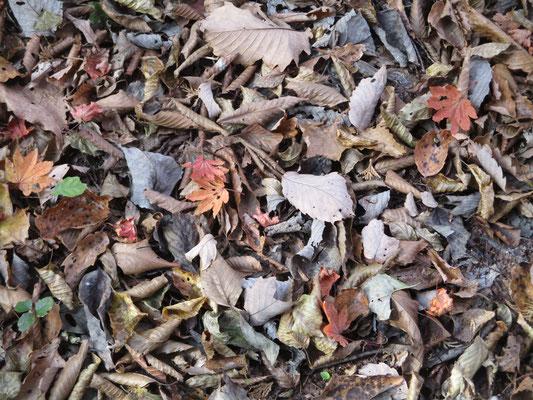 一面の落ち葉3